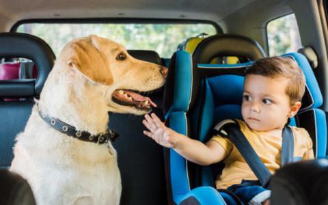 Καύσωνας: Σε πόση ώρα «βράζει» το αυτοκίνητο – Προσοχή στα παιδιά